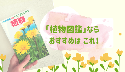 植物図鑑はポケット版がオススメ お散歩やお出かけに持ち運び便利!